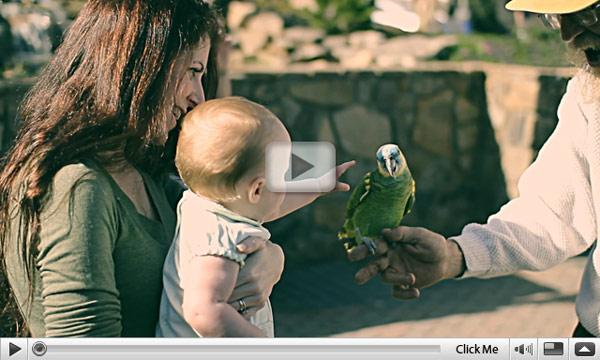 parrots-of-helen.jpg